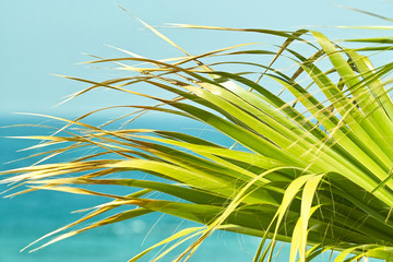 Palm leaves on background of the ocean.  Close up