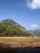 Reeds in Dalyan, Mugla, Turkey