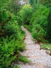 Walk path in the garden