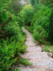 Walk path in the garden