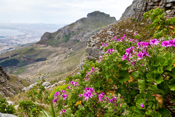 Flowers on the mountain side