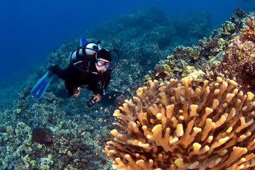 Diver looking at the Coral in Kona Hawaii