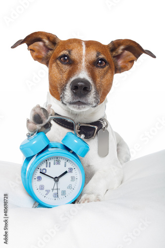 Dog early  awake with alarm clock