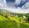 Beautiful summer landscape with a horse in the village in mounta