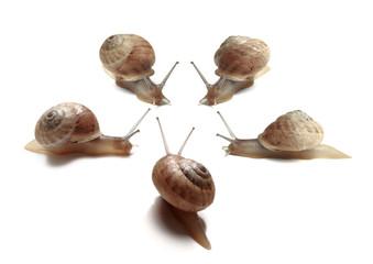 gruppo di lumache - slugs gruop
