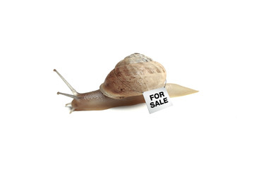 snail, slug, slowcoach