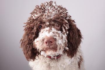 frozen dog