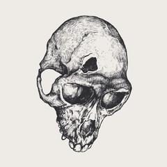 fractured skull monkeys. vector illustration