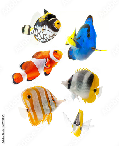 Leinwandbild Motiv fish, reef fish, marine fish party isolated on white background