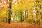 Fototapety Laubwald im Herbst