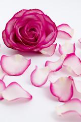 カーネンションの花とバラの花ビラ