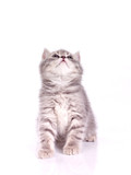 lovable isolated  kitten poster