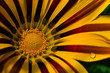 flower[rudbeckia]_01