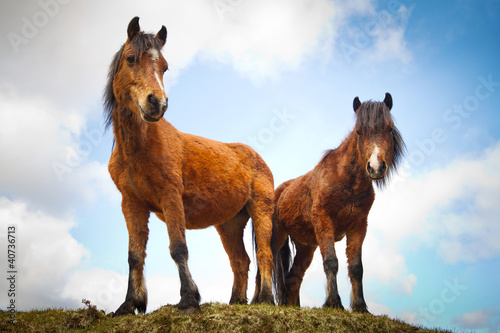 Irish horses on the hill