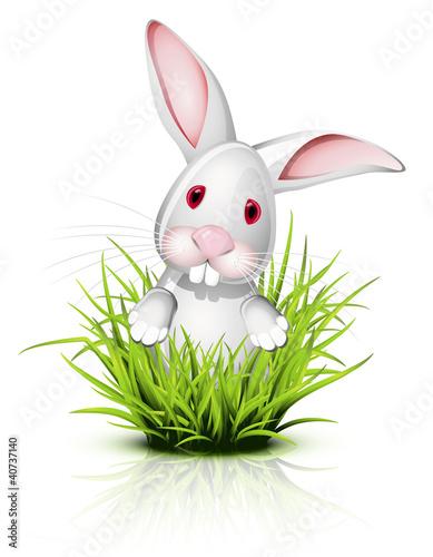 Fotobehang Boerderij Little rabbit on grass