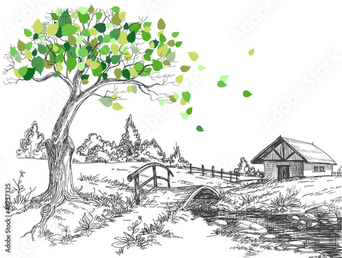 Green leaves spring tree, rural landscape, bridge over river