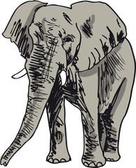 Sketch of elephant. Vector illustration