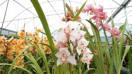 Wildlife Orchids