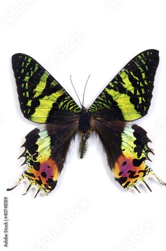 Aluminium Fyle Butterfly