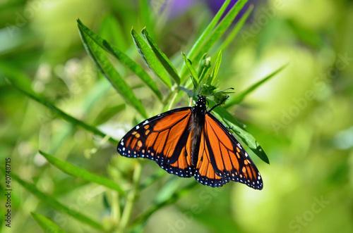 Deurstickers Vlinder Wildlife and Animals - Butterflies