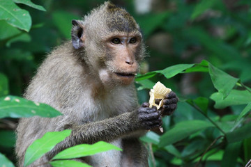 Monkey eating bread on tree
