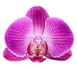Fototapeta kwitnąć - bukiet - Kwiat