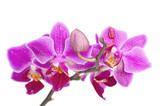 Fototapeta masaż - zapach - Kwiat