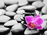 Fototapeta alternatywa - stabilności - Kwiat