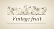 Vector vintage banner with a picture of fruit
