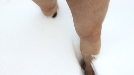 Walking barefoot on snow