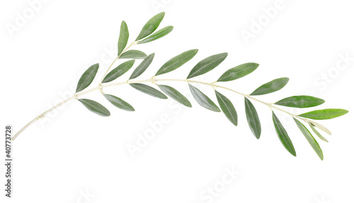 Tuinposter Olijfboom Olive branch on white, clipping path included