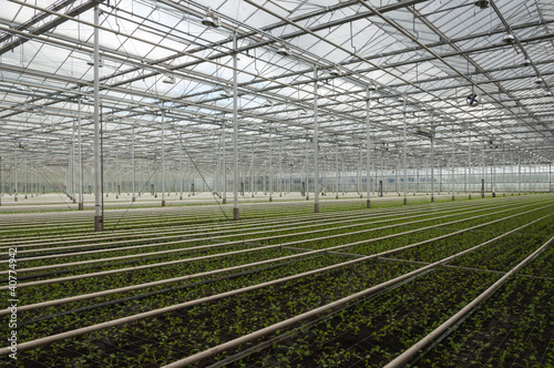 Advanced Dutch greenhouse complex with many small plants
