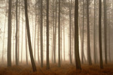 Trees growing in foggy forest