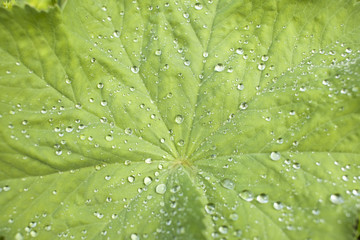 Close up of dew drops on leaf