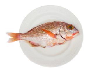 sama fish