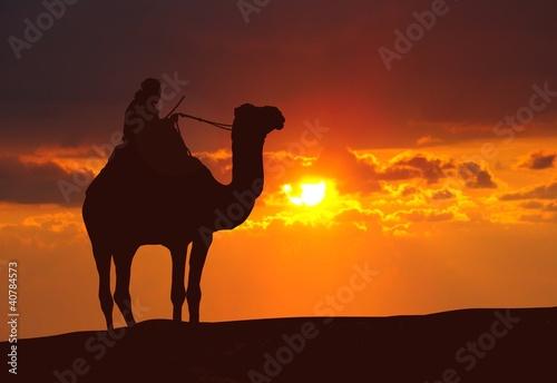 Camel on desert during sunset