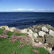 Flowers growing near rocky beach