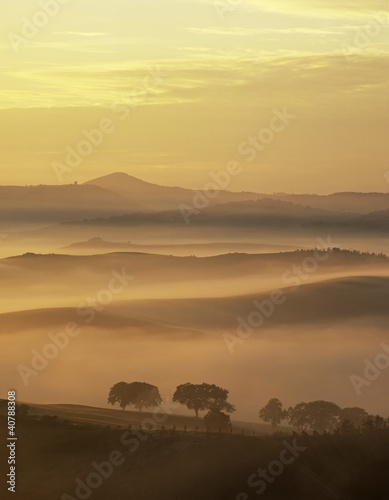Rural landscape cloaked in fog