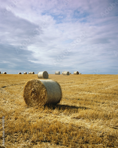 Haybales in field