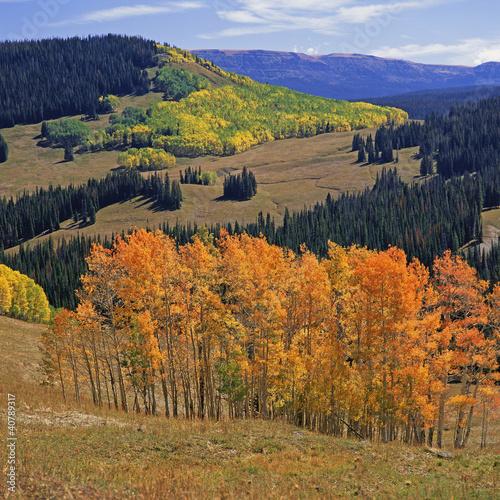 Trees growing on hillsides in rural landscape