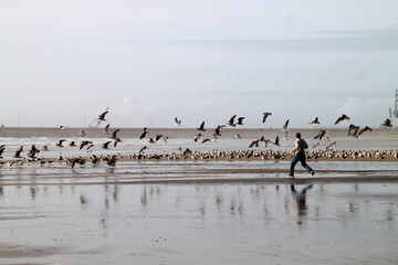 Boy running in the beach with seagulls flying