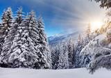 Fototapety Winter