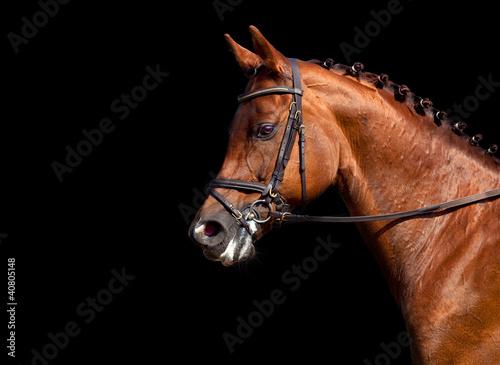 Ujeżdżenia koni Chestnut samodzielnie na czarnym tle