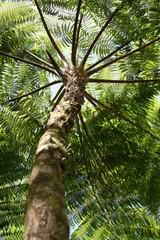Baumkrone im Regenwald