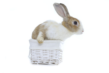 Adorable cute baby rabbit in wicker basket