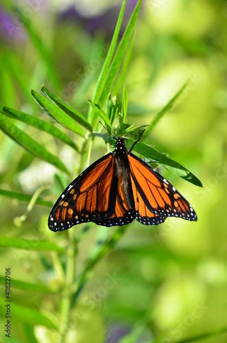 Deurstickers Vlinder Wildlife and Animals -Butterflies
