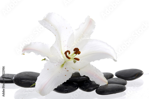 white lily with spa stone