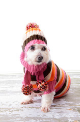 Adorable dog wearing winter sweater