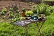 Garten, Tisch und Stuhl mit Pflanzen