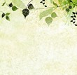 Green leaves, nature background